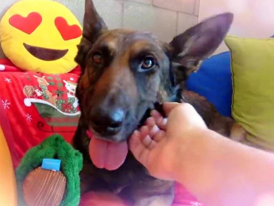 Привыкший к человеческой жестокости, собака показывает зубы и пытается напугать единственного мужчину, который ему помог