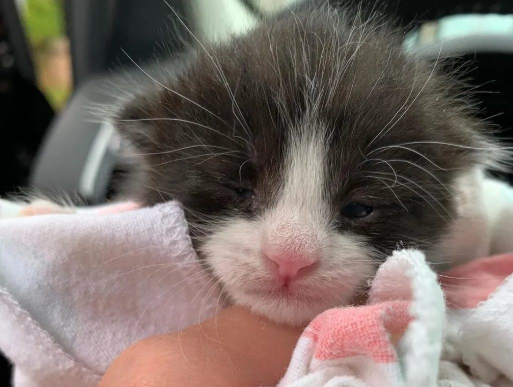 Кошка дружит с каждым котенком, которого встречает после того, как ее жизнь изменилась