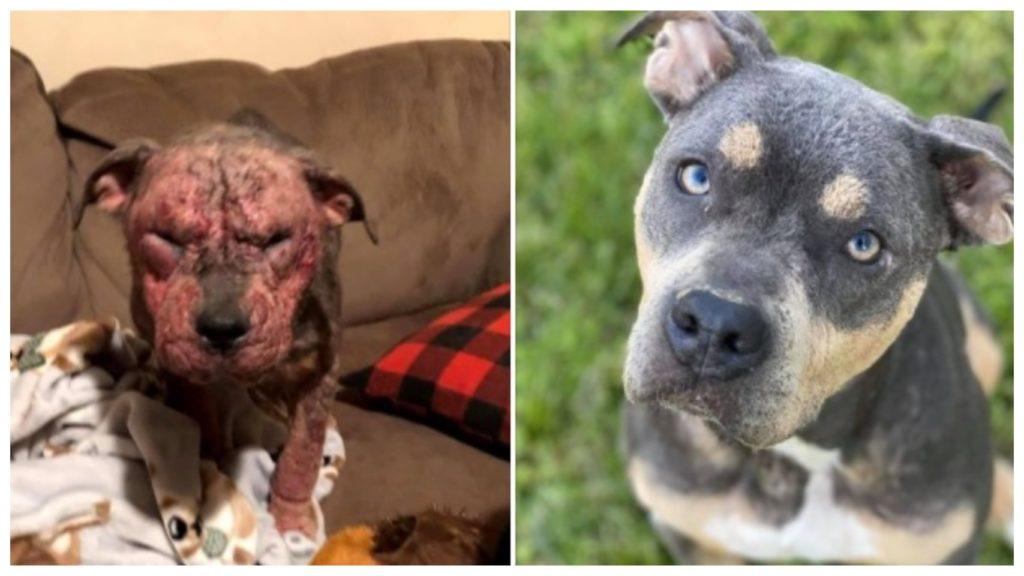 Пять месяцев женщина боролась за жизнь собаки