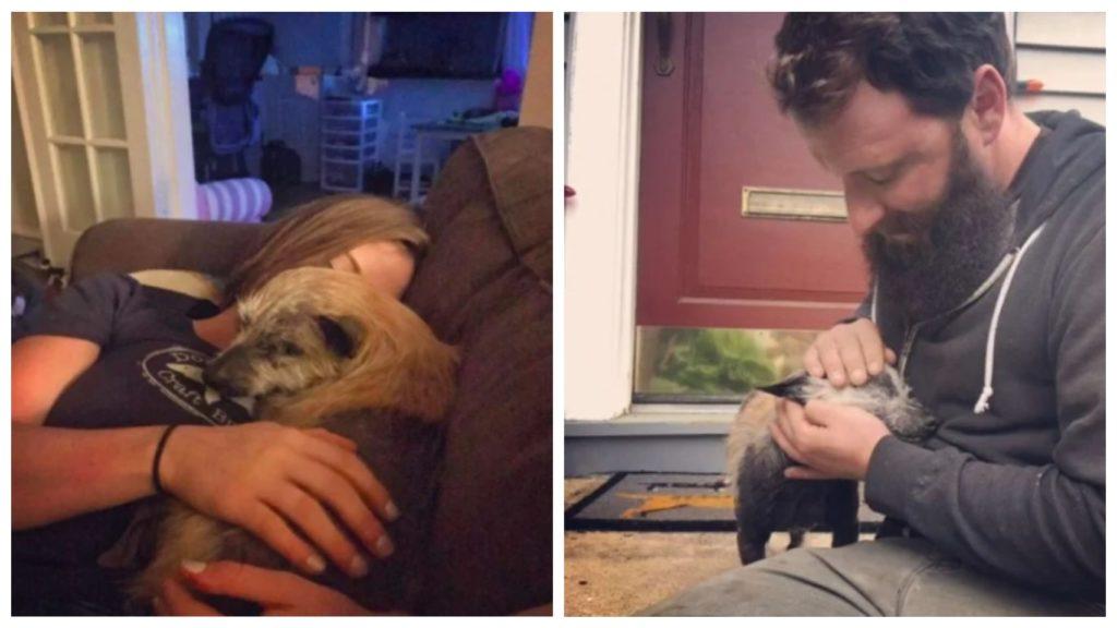 Пара находит брошенную полу-лысую пожилую собаку на дороге