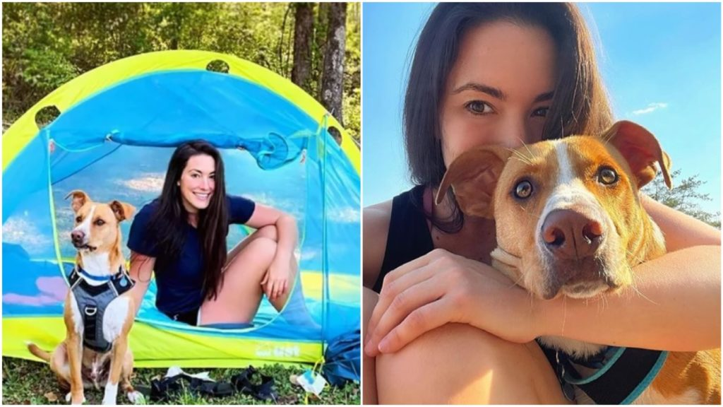 Бездомный пес нашел себе хозяйку и стал туристом
