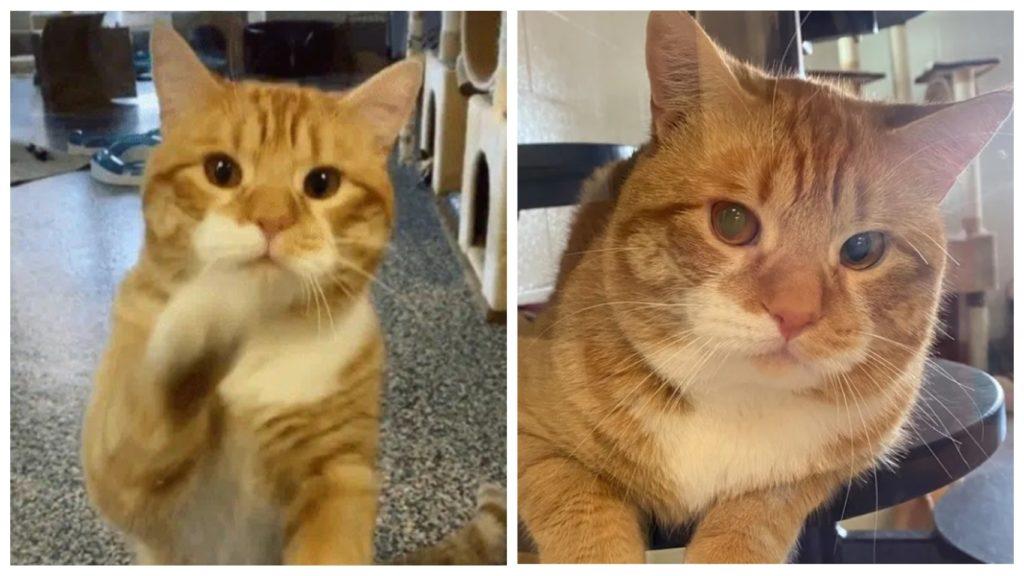 Кот машет посетителям в приюте и надеется, что кто-то сможет забрать его домой