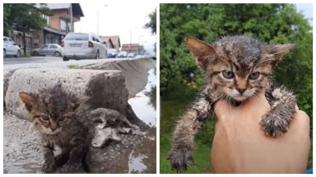 Женщина спасает раненого и залитого водой котенка, которого она нашла брошенным в сточной канаве