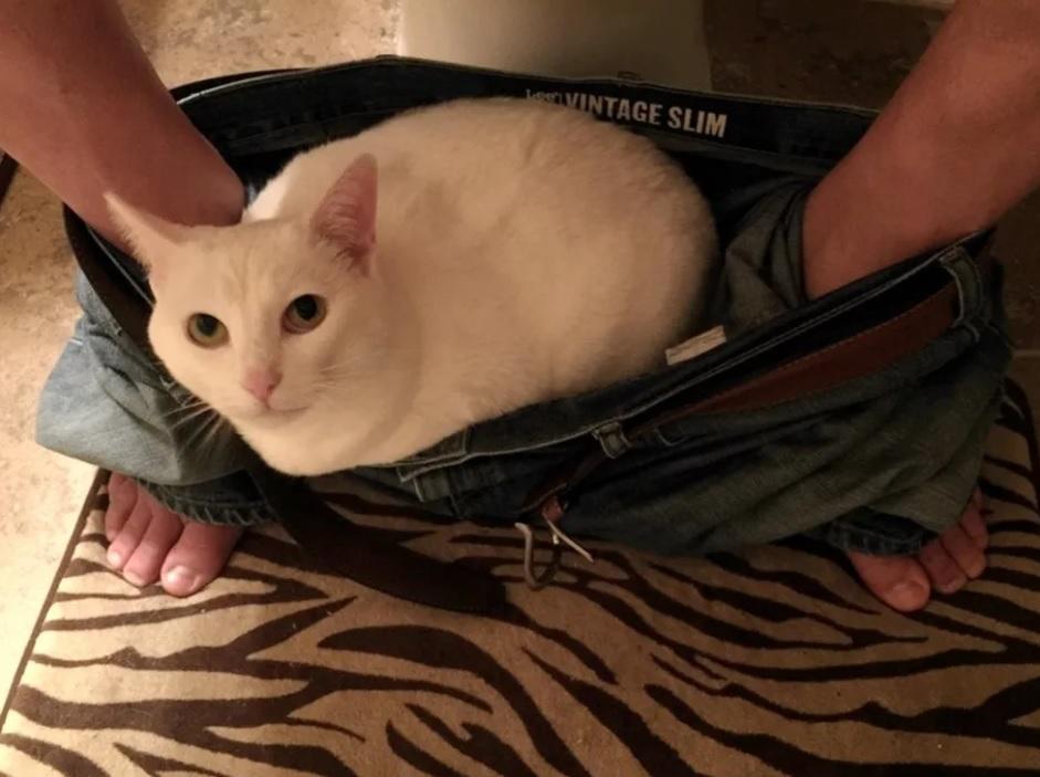 Кошка так благодарна и предана мужчине, который помог ей - что не отходит от него не на шаг!