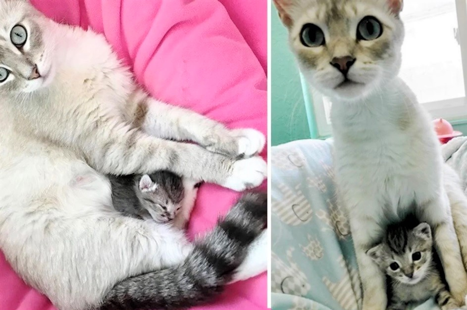 Кошка взяла котенка, найденного в одиночестве на улице, и начала ухаживать за ним