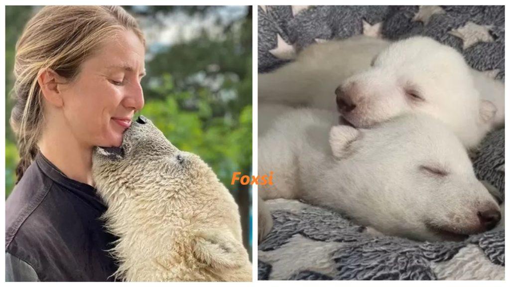 Для маленьких медвежат, которых бросила медведица, приемной мамой стала сотрудница зоопарка