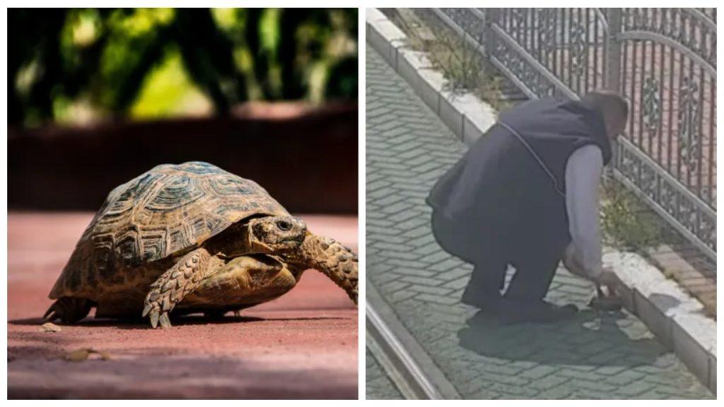Водитель трамвая помог черепахе, которая застряла между рельсов