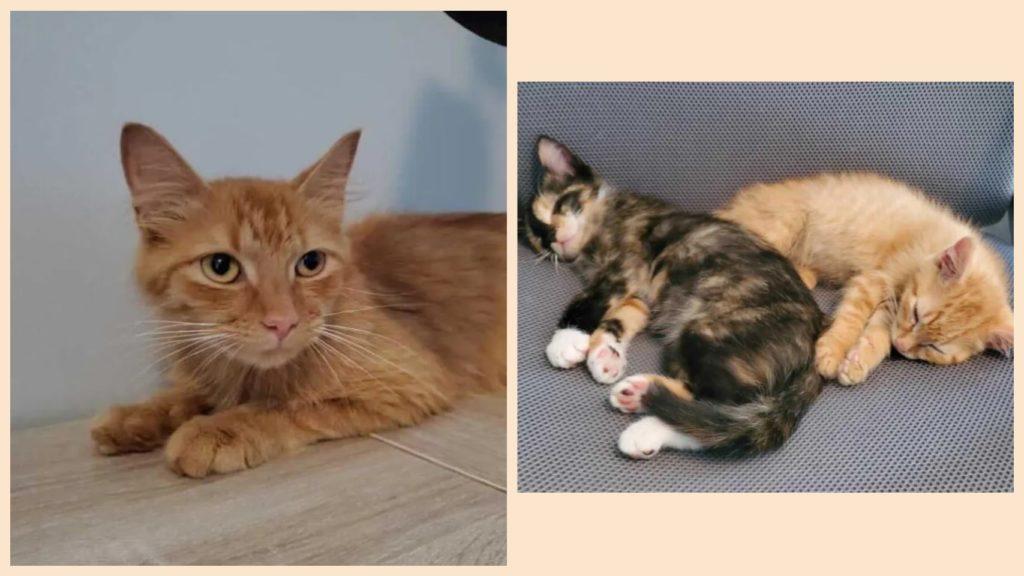 Кошка приносит котенка в семью, которой она доверяет, и возвращается на следующий день с другим