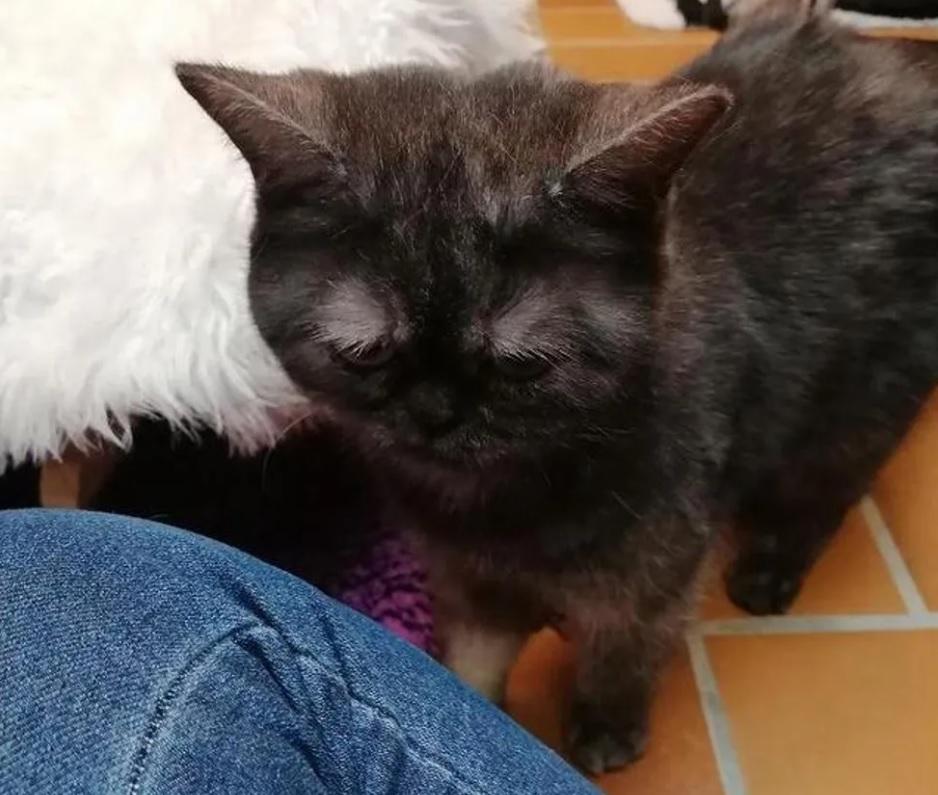 Кошка, у которой сварливое выражение мордочки, находит семью о которой мечтала, после нескольких месяцев ожидания