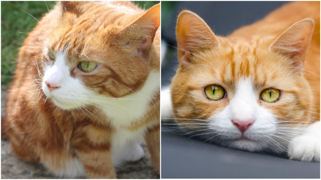 Желания сбываются: Женщина мечтала о коте бело-рыжего окраса, и он сам к ней пришёл