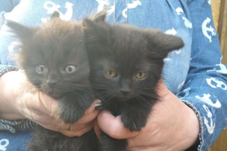 Благодаря детям котята остались живы и обрели семью и дом