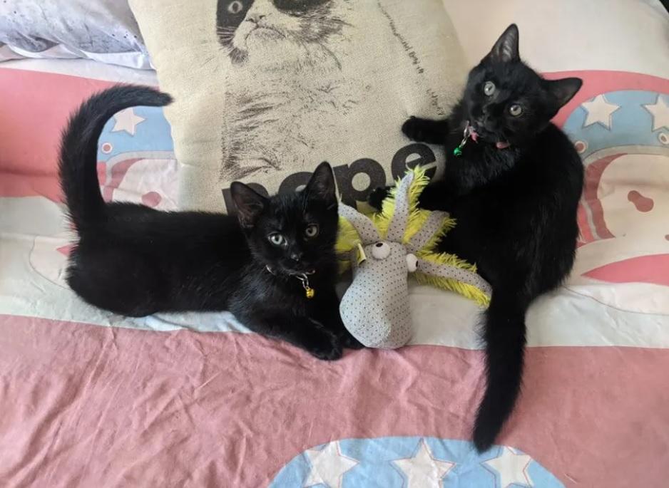 Два котенка-близнеца неразлучны друг с другом!