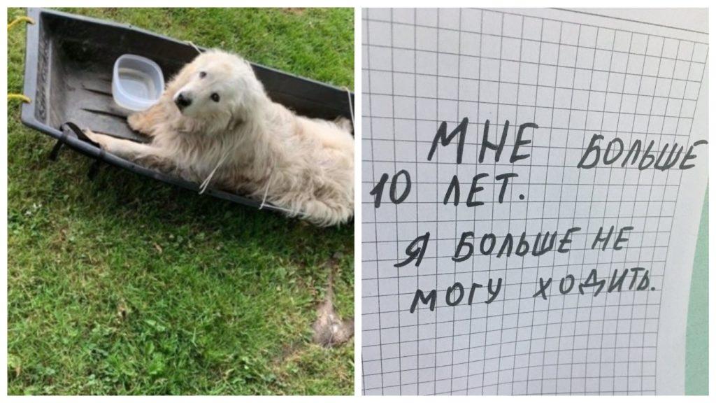 Собаку бросают привязанной к саням с запиской