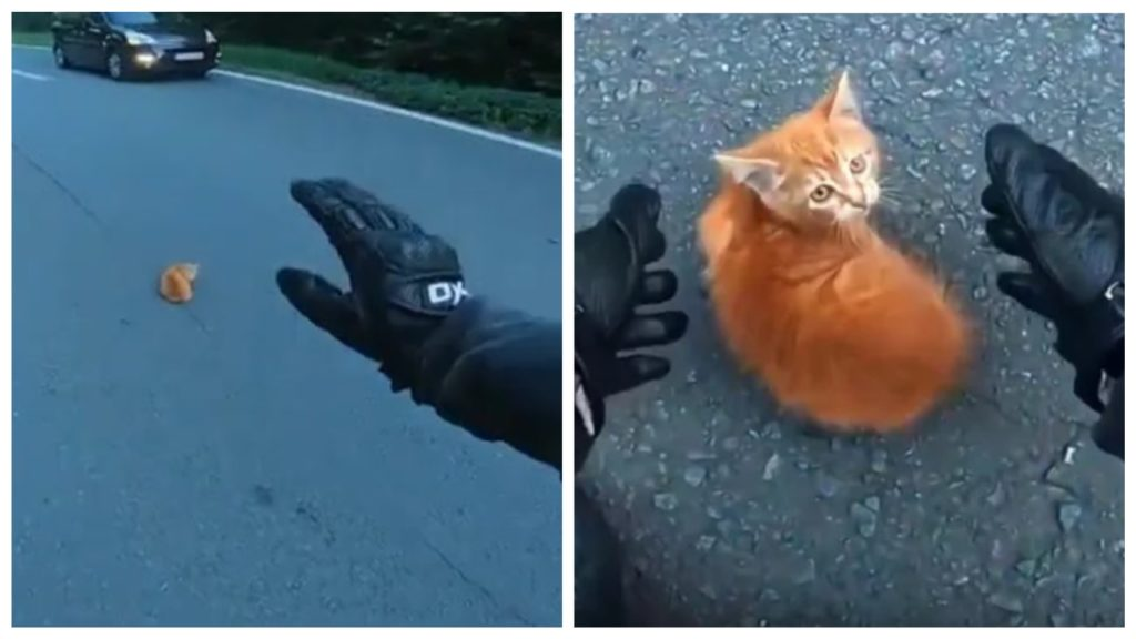Мотоциклист спас котенка - который оказался посреди дороги