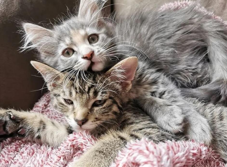 Котенок тайком выходит из своей комнаты, чтобы подружиться с новым котенком которого принесли домой