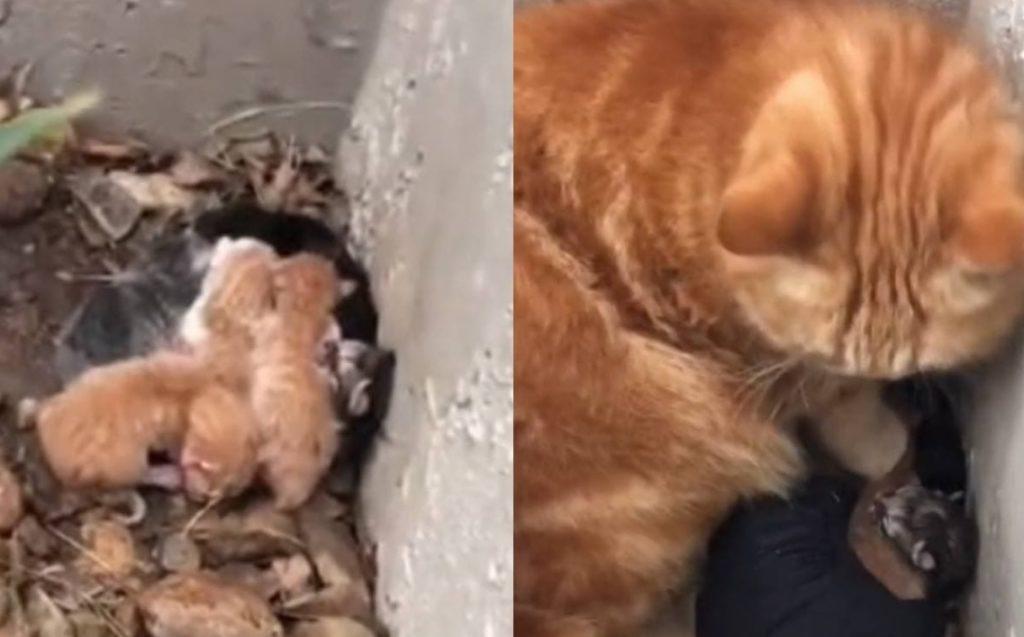 Девушка откликнулась на просьбу уличной кошки спасти её котят, и приобрела себе преданного друга