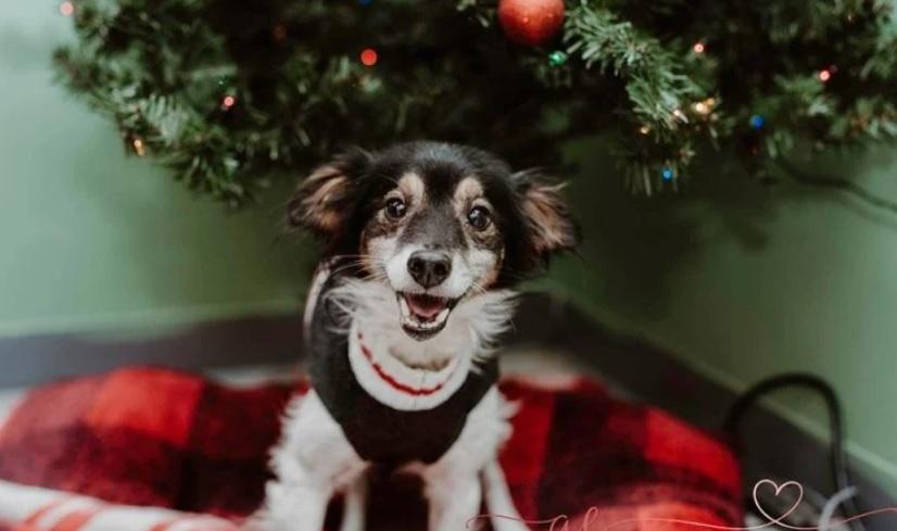 Брошенная и привязанная на снегу собака, переполнена радостью во время спасения
