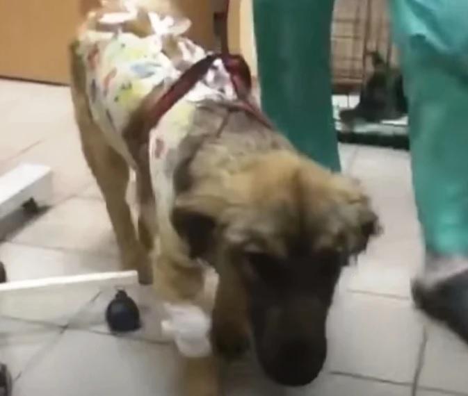 Больная и грустная собака найдена брошенной на автобусной остановке