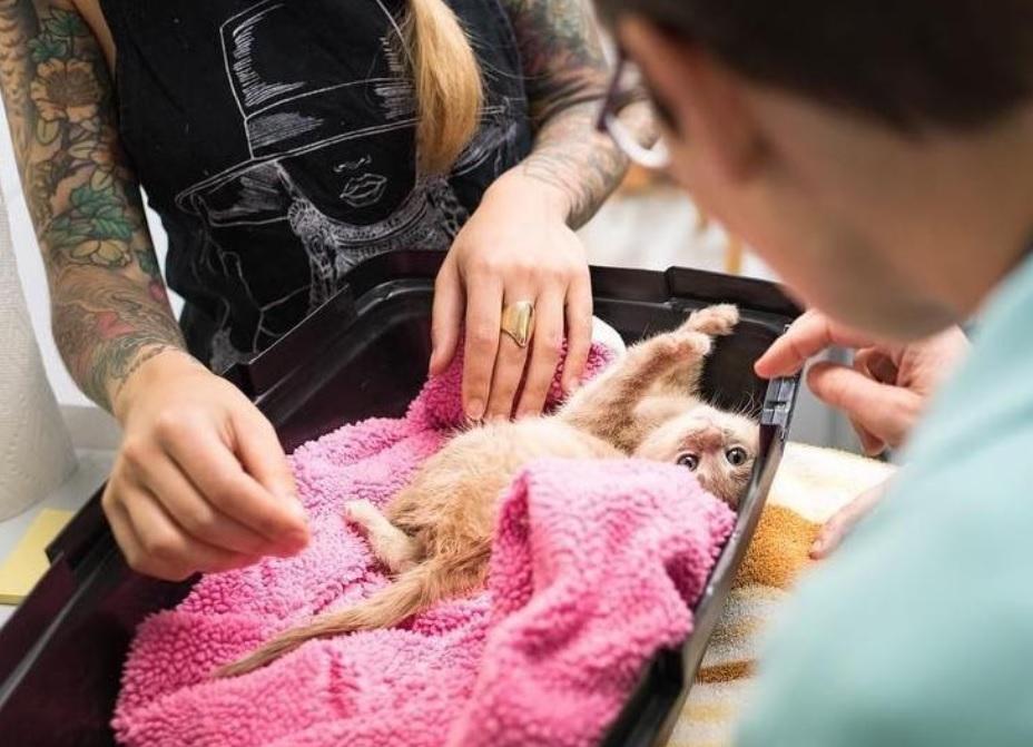 У кошечки с парализованными задними лапками появился шанс на выздоровление