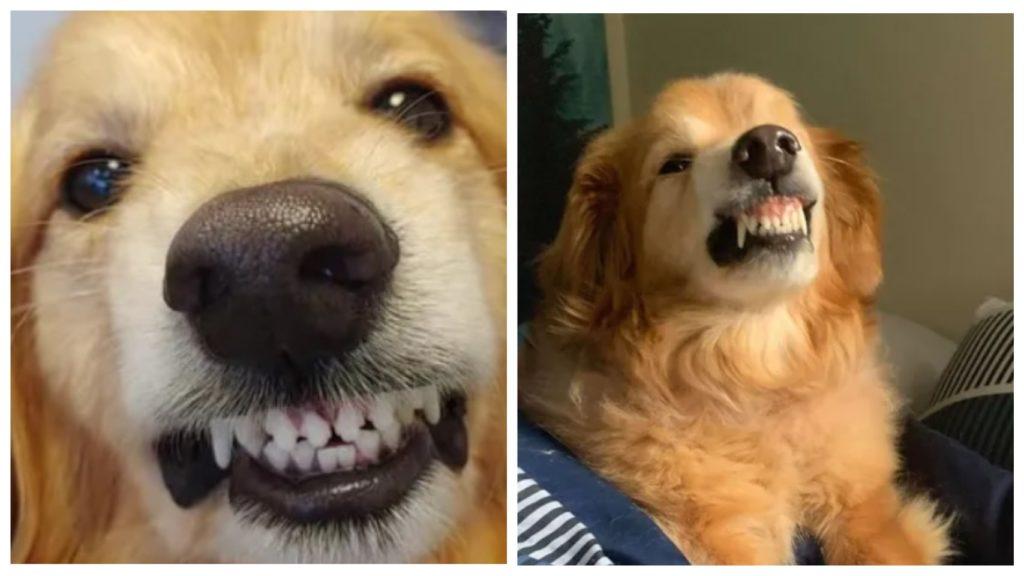 Пес, который пугал посетителей приюта своей агрессивной улыбкой, дождался своего хозяина