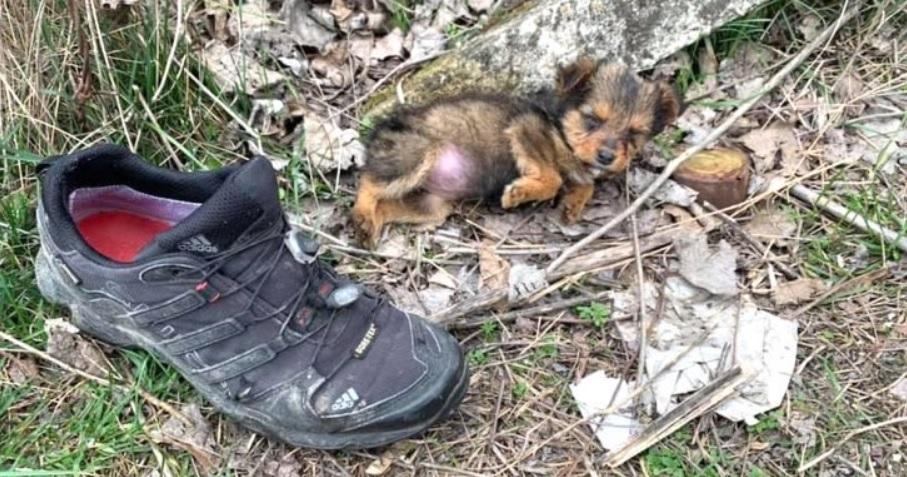 Брошенный щенок залез в старые кроссовки, чтобы чувствовать себя комфортно