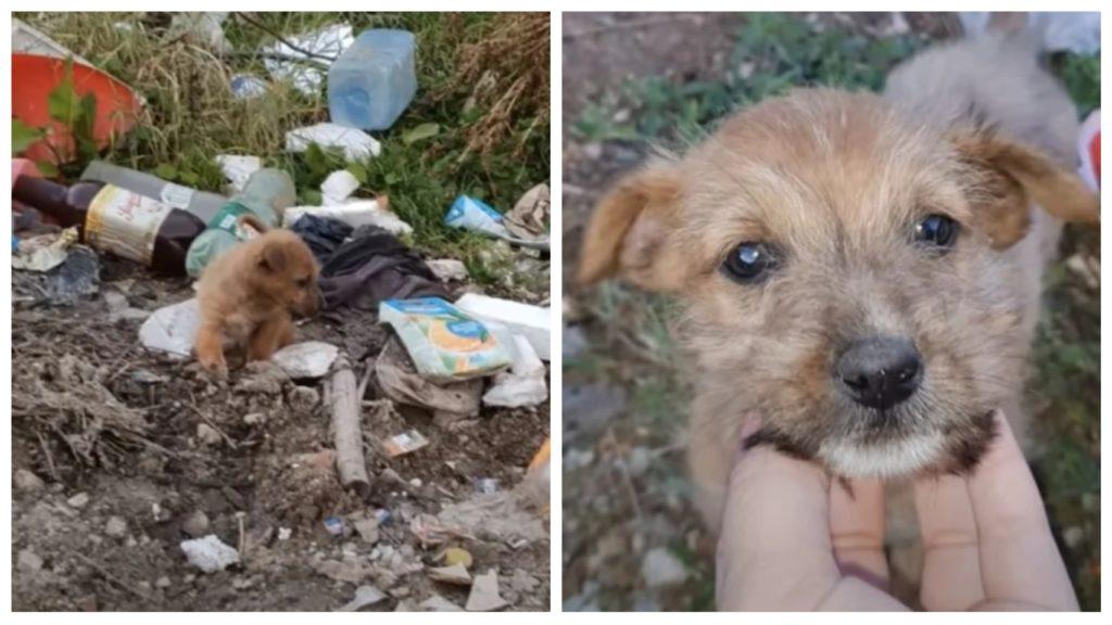 Брошенный щенок потерял лапу, когда он изо всех сил пытался найти еду в куче мусора