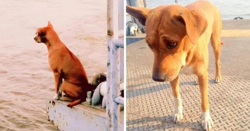 Собака, брошенная на пирсе, месяцами ждет возвращения своего хозяина