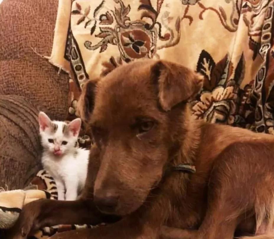 """Собака стала мамой для брошенного котенка: """"Люди бросили - а Каштанка нет!"""""""