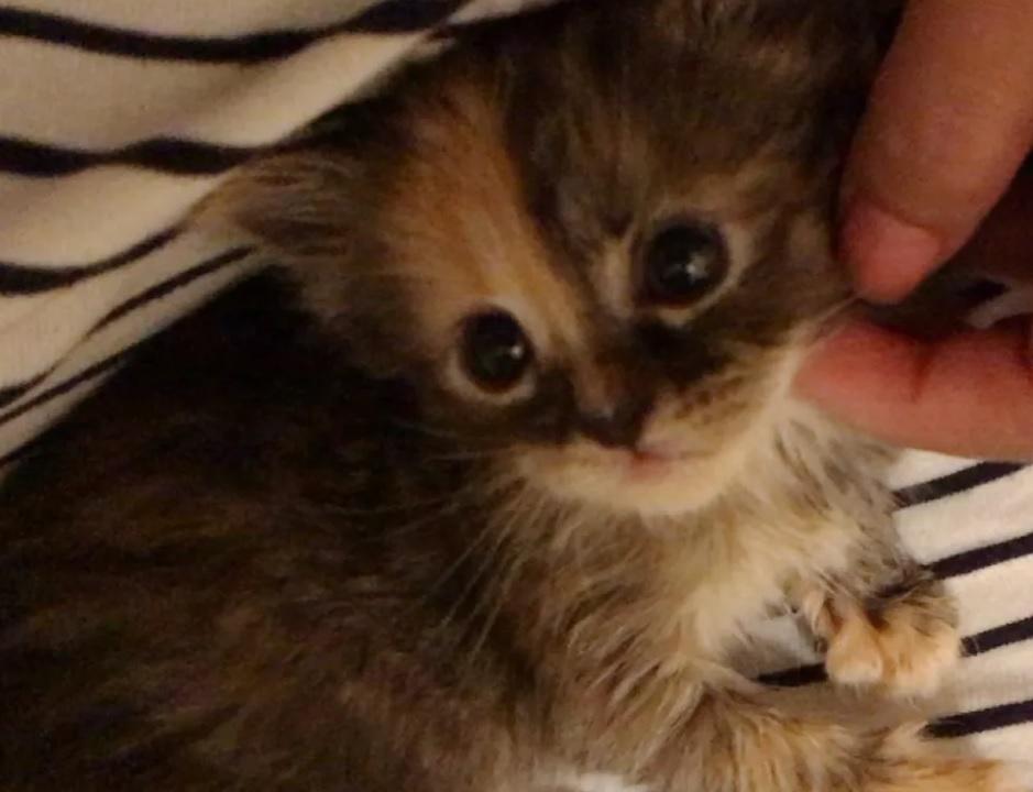 Найденный в поле котенок обнимает своего спасителя и настаивает на том, чтобы остаться с ним