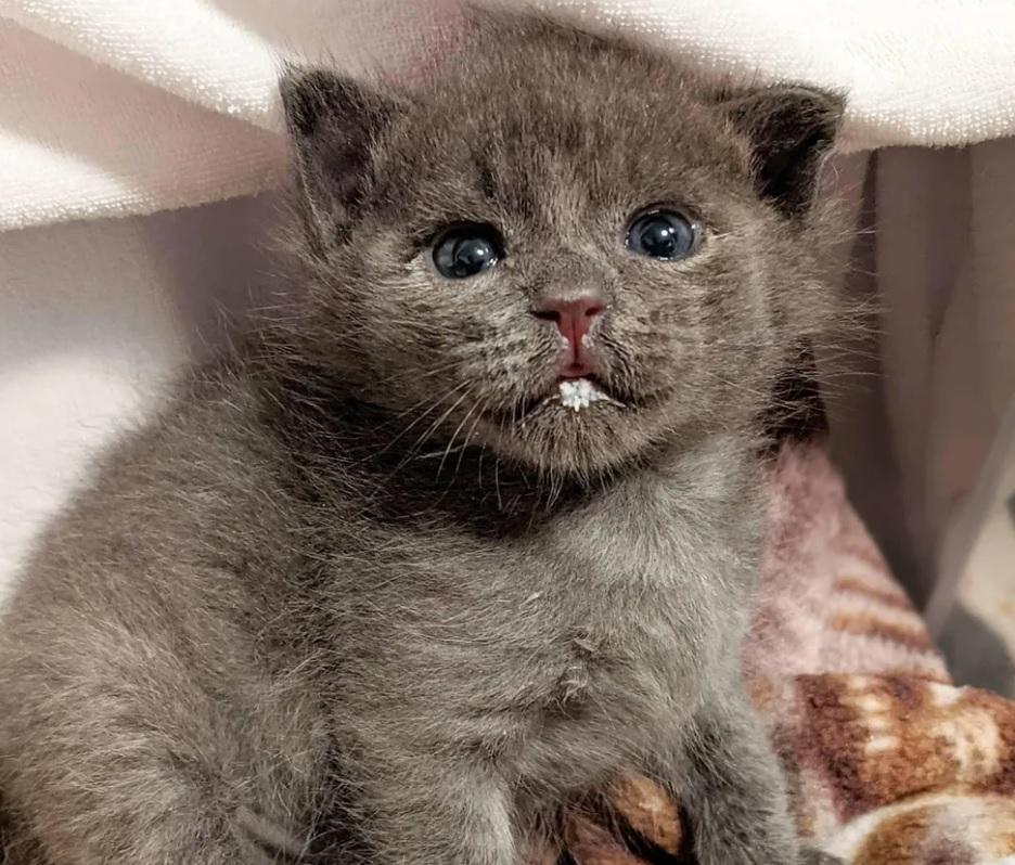 Найденный котенок с очаровательной привычкой, покоряет всех