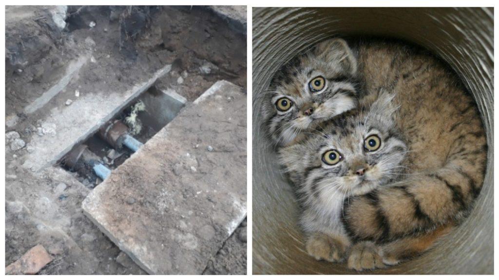 Спасения котят, которых могли закопать при ремонте трубопровода