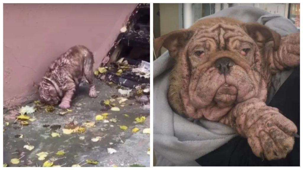 Брошенная собака должна была есть листья, чтобы выжить