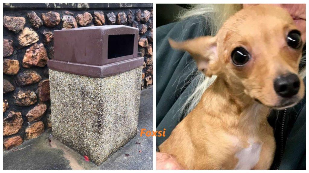Женщина находит маленькое животное, плачущее в мусорном контейнере