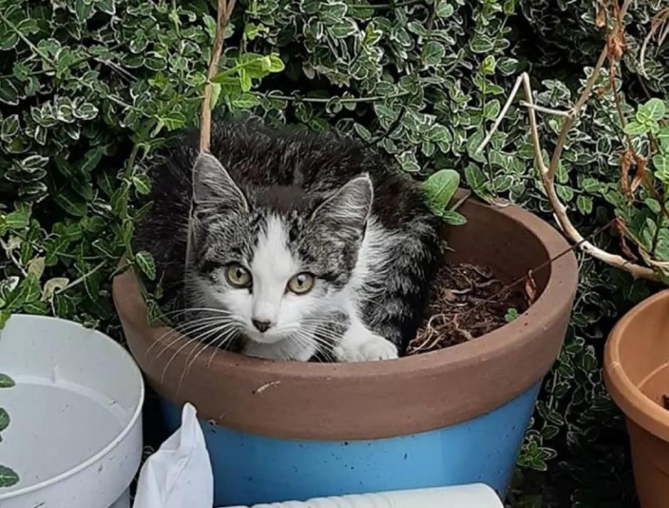 Кот подружился с бездомным котенком со двора и привел его в свой дом