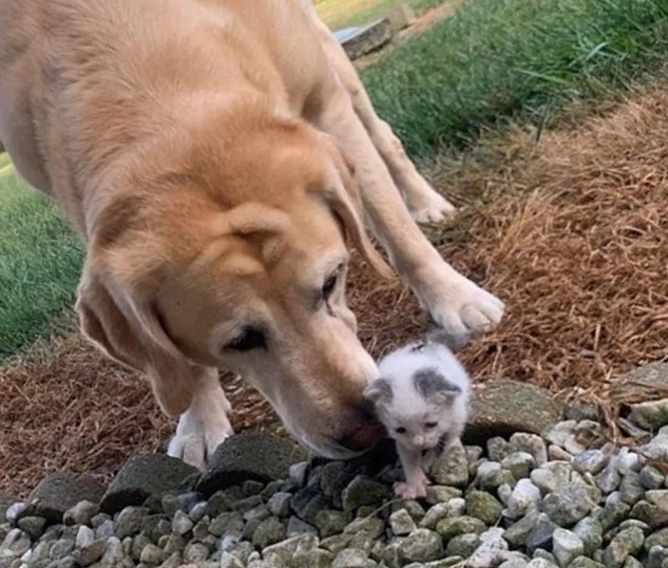 Собака берет бродячку котенка под свое крыло и превращает ее в прекрасную кошку
