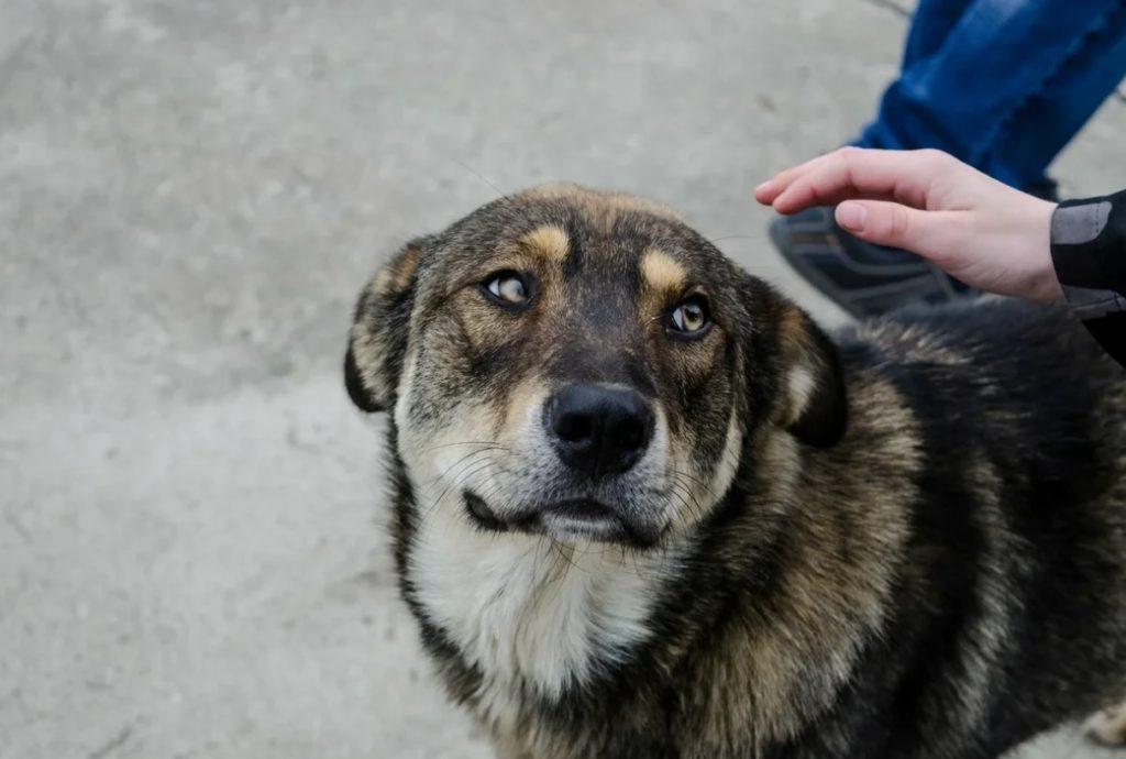 Благодаря дворовой собаке - семья спаслась от наводнения!