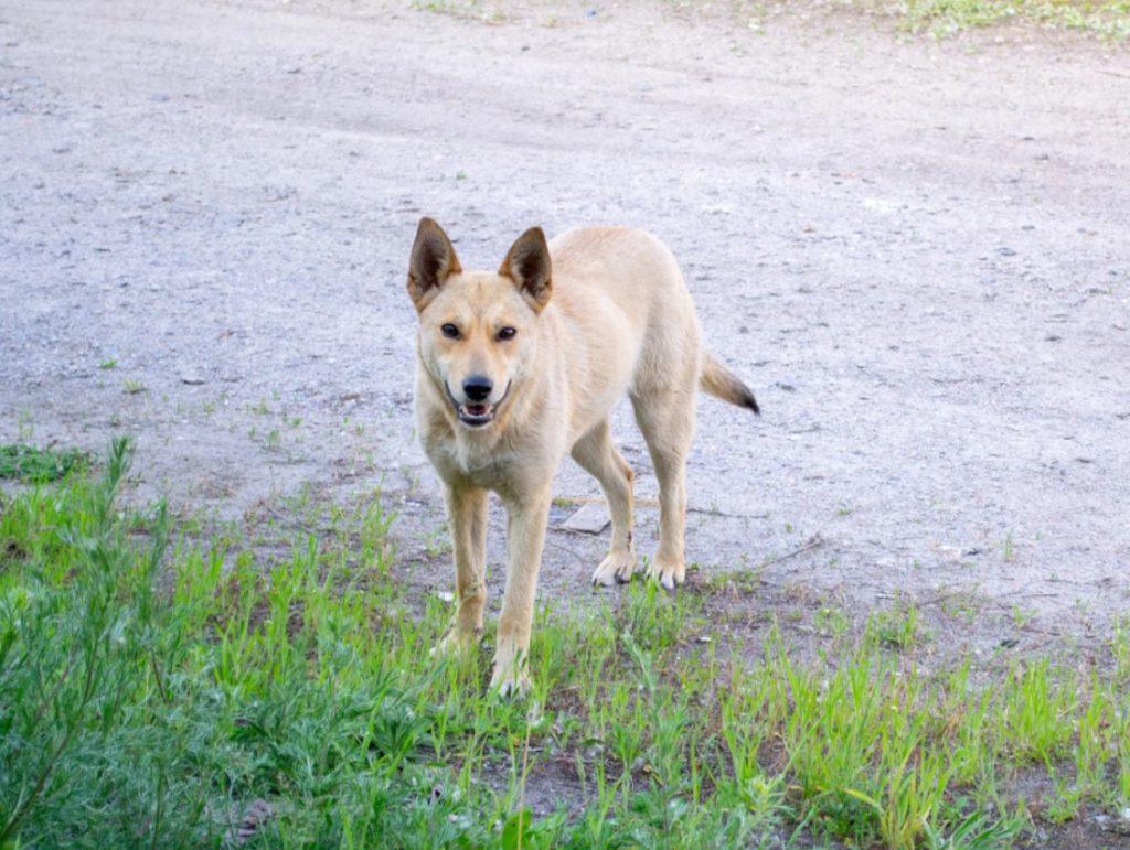 Дворовая собака, которую не любила семья, спасла их сына и стала их любимицей!