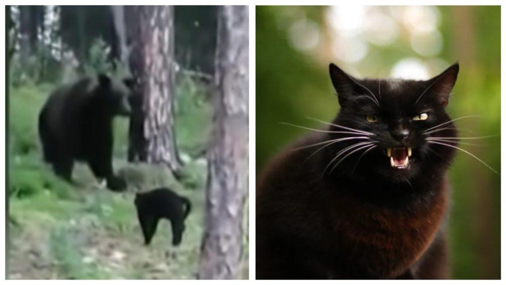 Смелый и бесстрашный кот не побоялся даже медведя