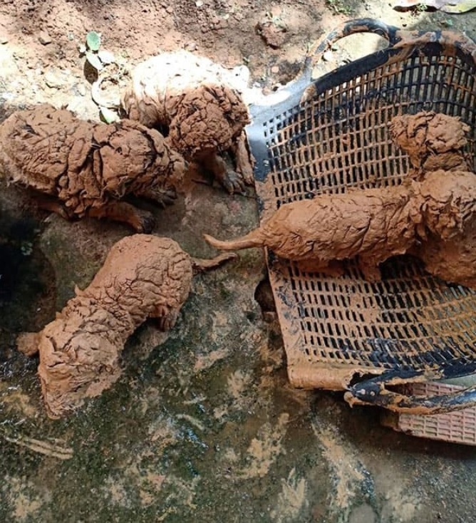 В колодце находят пять «шариков» грязи – оказывается, на самом деле это пять щенков!