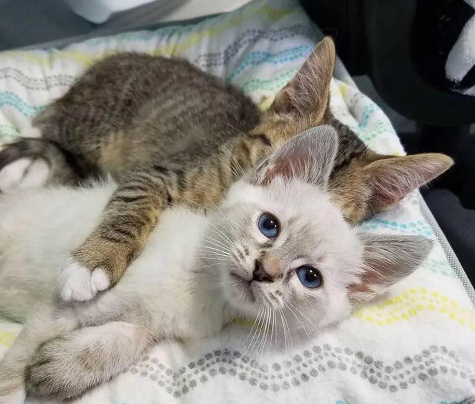 Два котёнка из разных пометов пересеклись и стали друг для друга самыми родными: Они настаивали на том, чтобы остаться вместе навсегда!