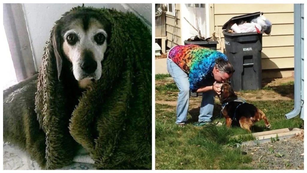 Через 2 года мужчина наконец-то нашел свою пропавшую пожилую собаку