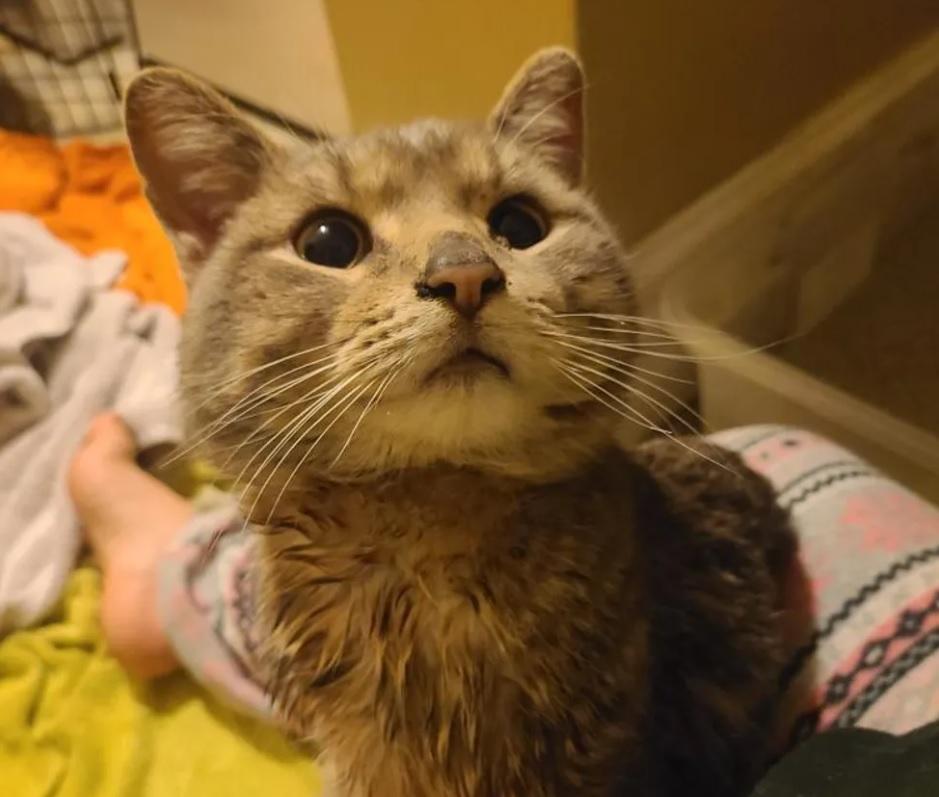 Кошка появилась у дверей рабочего места и попросила впустить ее внутрь от дождя