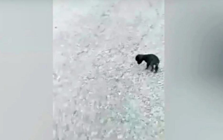 Слепой и дрожащий от голода щенок найден брошенным на улицах, игнорируемым всеми