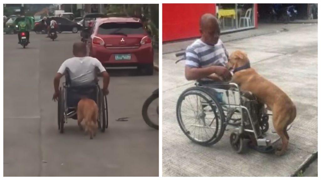 Собака замечена толкающей своего владельца в инвалидной коляске