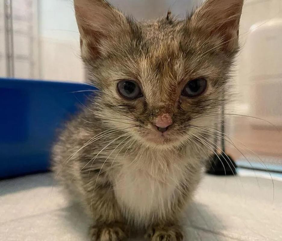Большой и шикарный кот стал отцом для троих бездомных котят