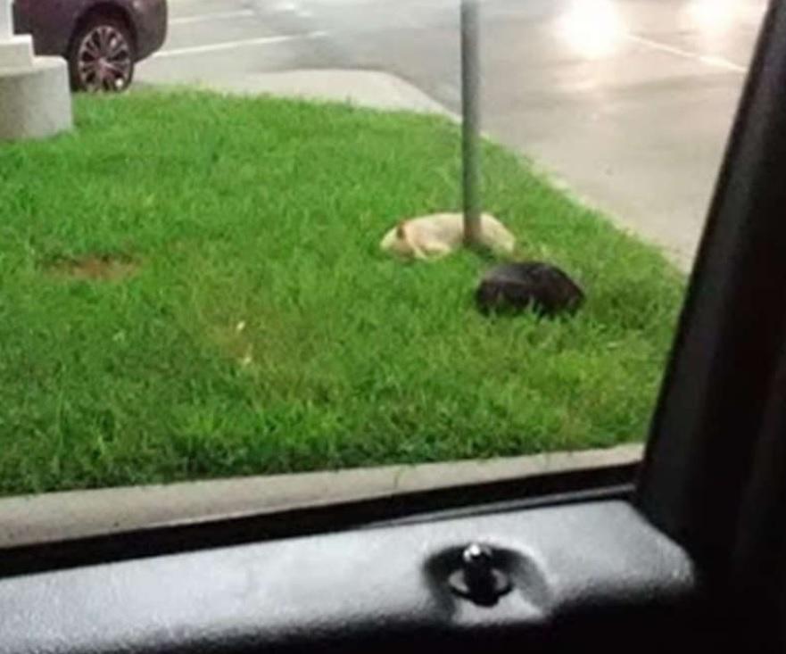 Собаки, которые жили на парковке, умоляли о спасении