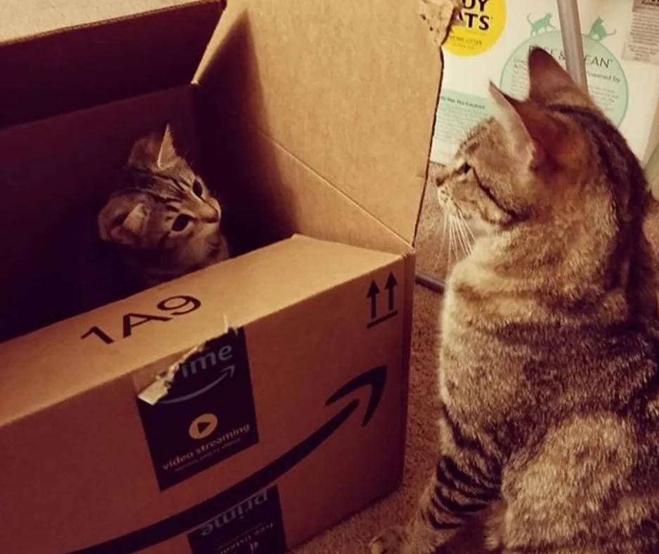 Семья приходит, чтобы забрать с приюта котенка, но не может оставить его маму-кошку