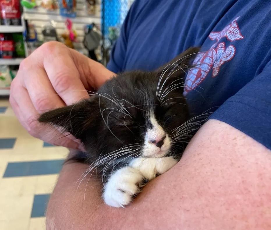 Котенок с великолепными усами, вместе с братиком обрел любящую семью