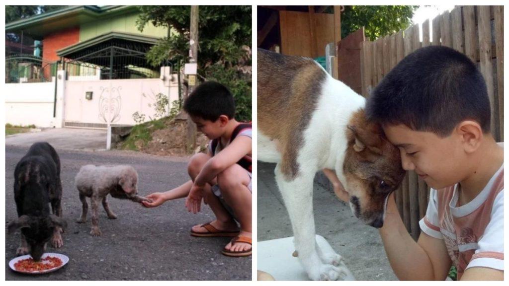 Мальчик, который использовал свои сбережения для кормления уличных животных, реализует мечту об открытии приюта