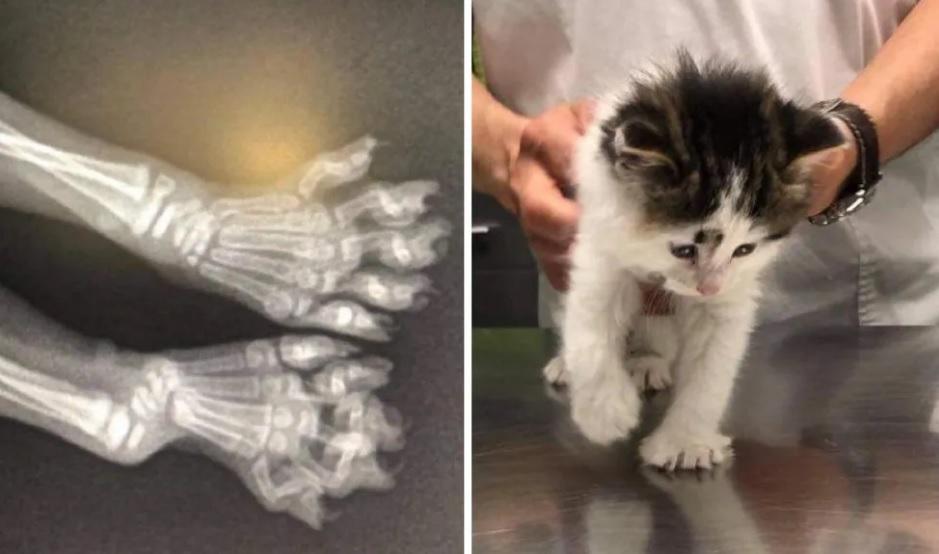 Котенок, который прятался внутри шлакоблока, наконец осмелился вылезти и действительно преобразился
